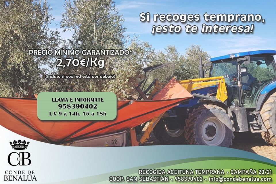 cosecha-aceite-campana-2020-21